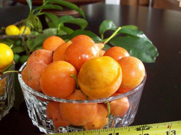 Imbe - Rare Fruits