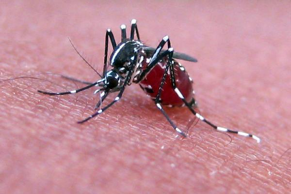 Mosquito Killer Insects