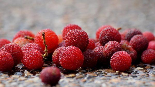 Red Bayberry - Rare Fruits