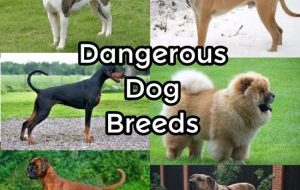 15 Most Dangerous Dog Breeds in the World