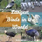 10 Largest Birds in the World