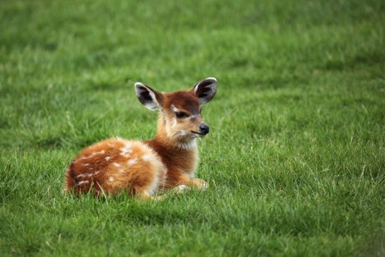 Cute Animals Pictures