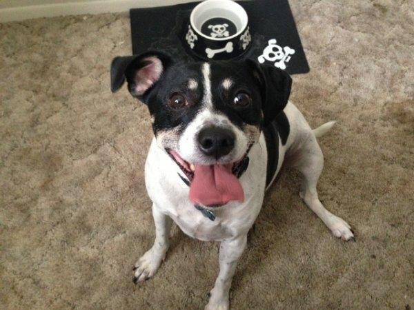 Raggle Designer Dog Breeds