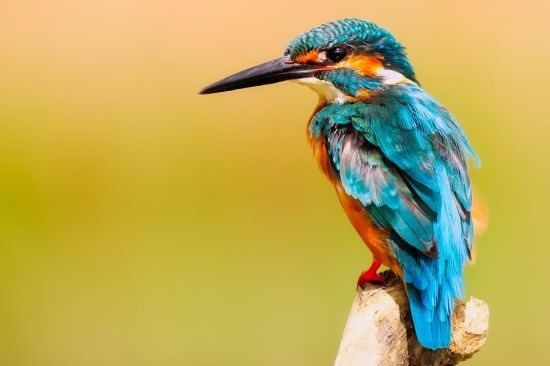 Kingfisher Different Types of Birds
