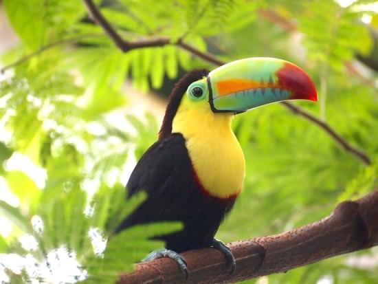 Toucan Different Types of Birds