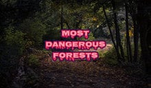 Most Dangerous Forests in the World